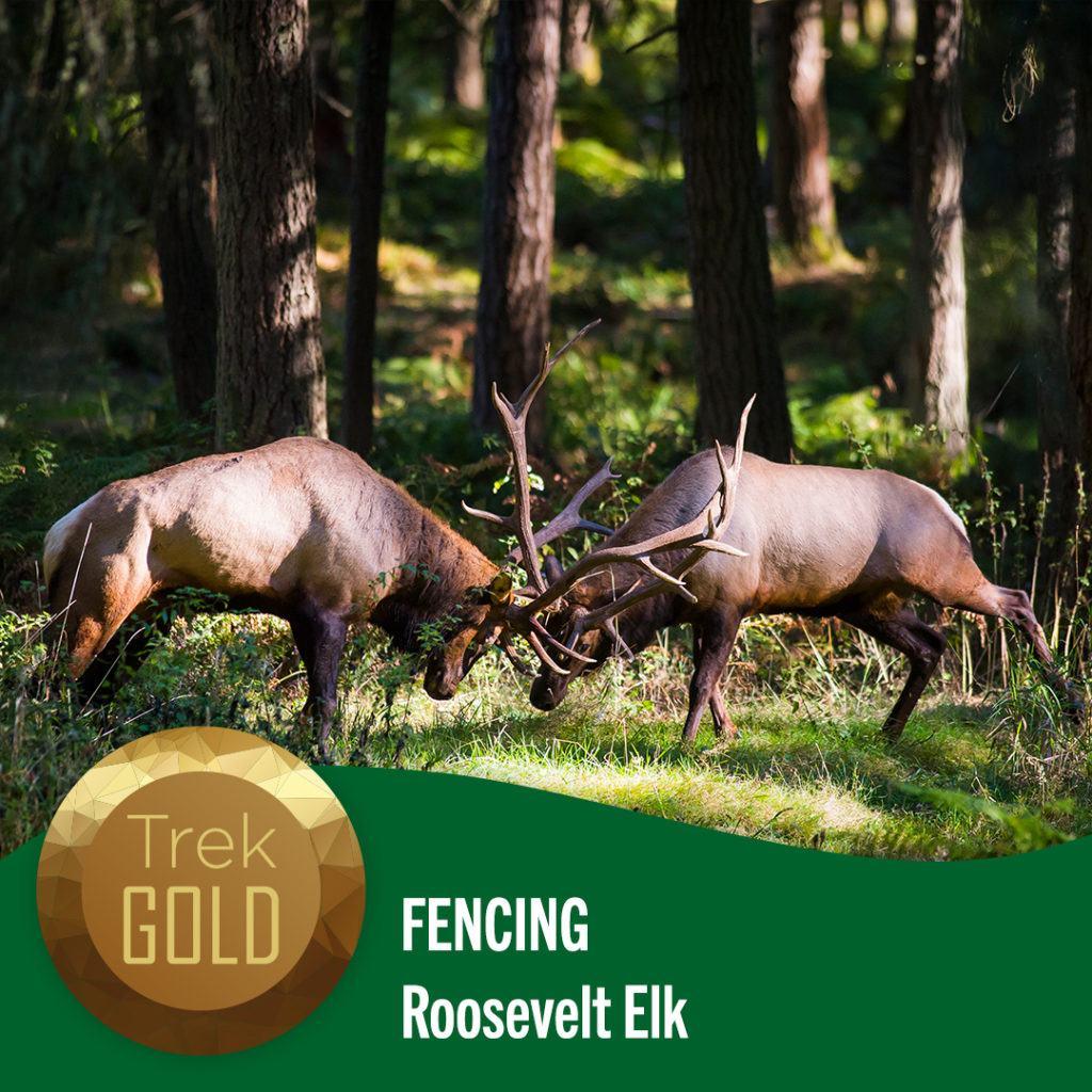 fencing elk
