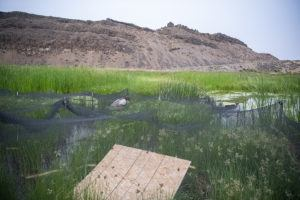 frog release landscape